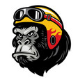 gorilla head wearing the helmet vector image vector image
