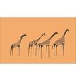 petroglyph herd giraffes vector image