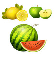 ripe striped watermelon realistic juicy apple vector image vector image