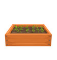 seedling in a wooden box vector image