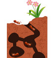 cartoon ants colony vector image