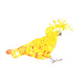 cockatoo silhouette with yellow orange and brown vector image vector image
