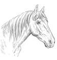 horse portrait-17 vector image vector image