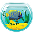 Angel fish vector image