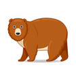 grizzly bear animal standing on a white background vector image vector image
