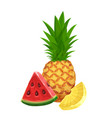 pineapple and a slice watermelon vector image