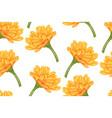 seamless botanical pattern with calendula flowers vector image