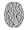 Human Brain doodle vector image vector image
