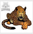 leopard - isolated on white vector image