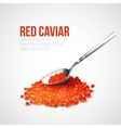 Red caviar in a spoon over blue background vector image