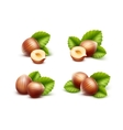 Set of Peeled Unpeeled Hazelnuts with Leaves vector image