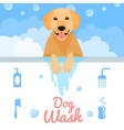 Dog wash vector image vector image