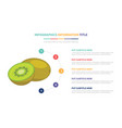 kiwi infographic template concept with five vector image