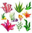 set colorful sea algae vector image