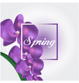 spring purple orchid white background image vector image