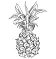 hand drawing fruit-10 vector image
