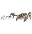 hand drawn sea turtle life cycle vector image