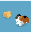 Pets Guinea Pig Icon Isometric 3d Design vector image vector image