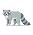 raccoon animal standing on a white background vector image vector image