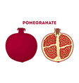 red fruit - pomegranate juicy nutrition vector image vector image