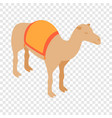 camel isometric icon vector image vector image