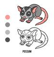coloring book possum vector image vector image