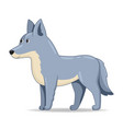 grey wolf animal standing on a white background vector image vector image