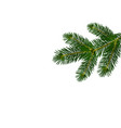 a green realistic lush branch of fir or pine vector image vector image