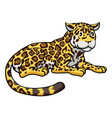 cartoon jaguar cat vector image
