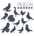 poultry farming pigeon breeds icon set flat design vector image vector image