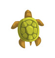 sea turtle reptile view from above cartoon vector image vector image