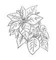 sketch of leafs vector image vector image