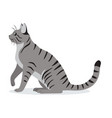 smooth coated tabby cat with long tail icon cute vector image