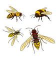 bee wasp bumblebee horne vector image vector image