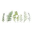designer elements set green forest plants herb vector image vector image