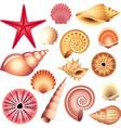 shells set vector image vector image