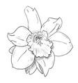 sketch of flower vector image