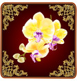 stem orchid phalaenopsis with golden flowers vector image vector image