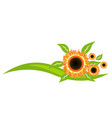 sunflowers icon decoration design vector image vector image