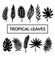 Tropical Leaves set vector image