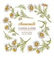 chamomile flowers set vector image