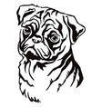 decorative portrait pug dog vector image vector image