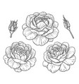 hand drawn monochrome rose flowers and buds vector image vector image