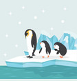 penguin family in north pole arctic vector image vector image