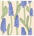Seamless pattern with grape hyacinth vector image vector image
