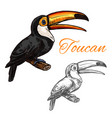 toucan sketch wild exotic bird icon vector image vector image