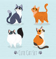 cats breed set vector image