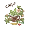 Doodle cup of coffee Cup of tea with milk vector image vector image
