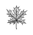 dotwork maple leaf vector image vector image
