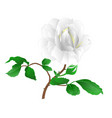 rose flower white twig with leaves and bud vector image vector image